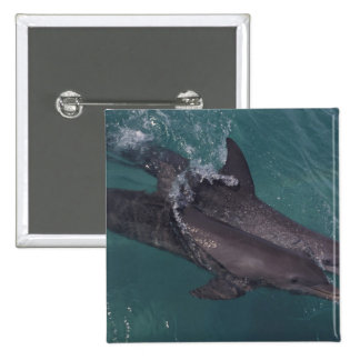 Caribbean, Bottlenose dolphins Tursiops 10 Button