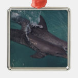 Caribbean, Bottlenose dolphins Tursiops 10 Metal Ornament
