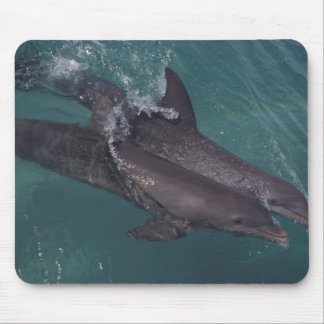 Caribbean, Bottlenose dolphins Tursiops 10 Mouse Pad