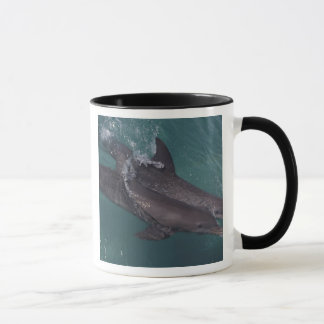 Caribbean, Bottlenose dolphins Tursiops 10 Mug