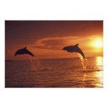 Caribbean, Bottlenose dolphins Tursiops 10 Photo