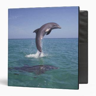 Caribbean, Bottlenose dolphins Tursiops 11 3 Ring Binder