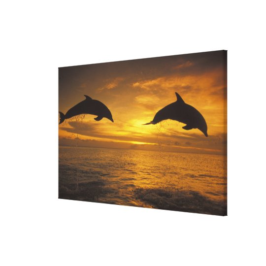 Caribbean, Bottlenose dolphins Tursiops 11 Canvas Print
