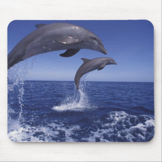 Caribbean, Bottlenose dolphins Tursiops 12 Mouse Pad
