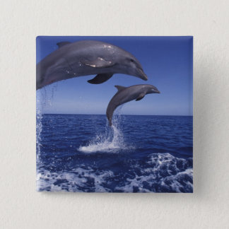 Caribbean, Bottlenose dolphins Tursiops 12 Pinback Button