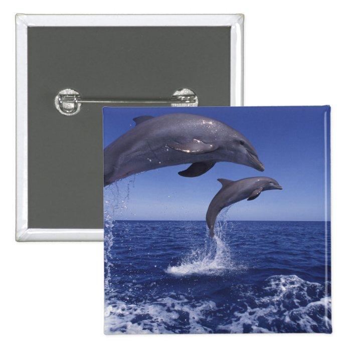 Caribbean, Bottlenose dolphins Tursiops 12 Pinback Button