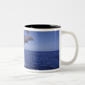 Caribbean, Bottlenose dolphins Tursiops 12 Two-Tone Coffee Mug