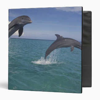 Caribbean, Bottlenose dolphins Tursiops 13 3 Ring Binders