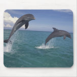 Caribbean, Bottlenose dolphins Tursiops 13 Mouse Pad