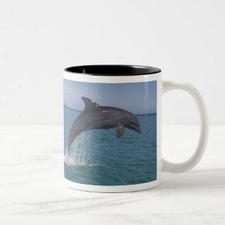 Caribbean, Bottlenose dolphins Tursiops 13 Two-Tone Coffee Mug