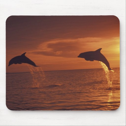 Caribbean, Bottlenose dolphins Tursiops 14 Mouse Pad