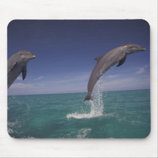 Caribbean, Bottlenose dolphins Tursiops 15 Mouse Pad