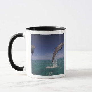 Caribbean, Bottlenose dolphins Tursiops 15 Mug