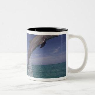 Caribbean, Bottlenose dolphins Tursiops 15 Two-Tone Coffee Mug