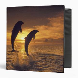 Caribbean, Bottlenose dolphins Tursiops 16 3 Ring Binder