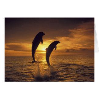Caribbean, Bottlenose dolphins Tursiops 16 Card