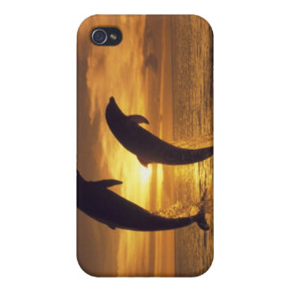 Caribbean, Bottlenose dolphins Tursiops 16 iPhone 4/4S Cover