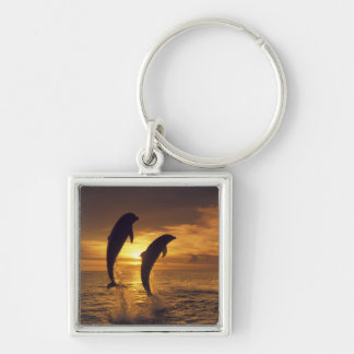 Caribbean, Bottlenose dolphins Tursiops 16 Keychain