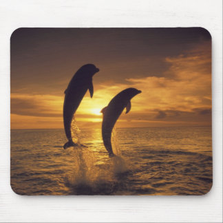 Caribbean, Bottlenose dolphins Tursiops 16 Mouse Pad