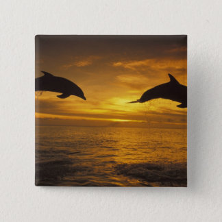 Caribbean, Bottlenose dolphins Tursiops 17 Button