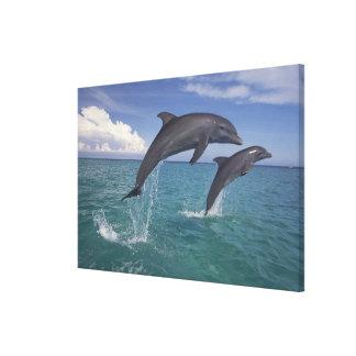 Caribbean, Bottlenose dolphins Tursiops 17 Canvas Print