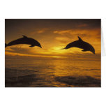 Caribbean, Bottlenose dolphins Tursiops 17 Card