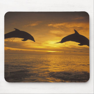Caribbean, Bottlenose dolphins Tursiops 17 Mouse Pad