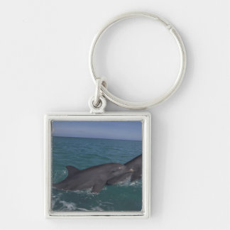 Caribbean, Bottlenose dolphins Tursiops 2 Keychain