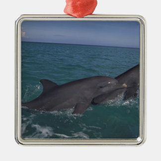 Caribbean, Bottlenose dolphins Tursiops 2 Metal Ornament