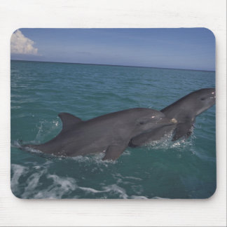 Caribbean, Bottlenose dolphins Tursiops 2 Mouse Pad