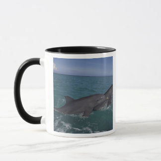 Caribbean, Bottlenose dolphins Tursiops 2 Mug