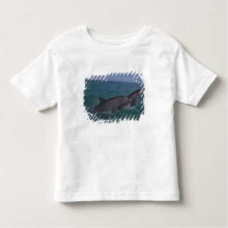 Caribbean, Bottlenose dolphins Tursiops 2 Toddler T-shirt