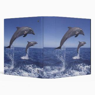 Caribbean, Bottlenose dolphins Tursiops 3 Binder