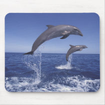 Caribbean, Bottlenose dolphins Tursiops 3 Mouse Pad