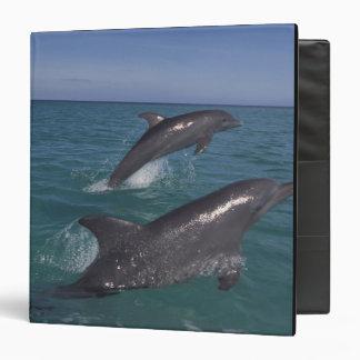 Caribbean, Bottlenose dolphins Tursiops 4 3 Ring Binders