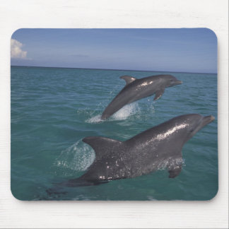 Caribbean, Bottlenose dolphins Tursiops 4 Mouse Pad