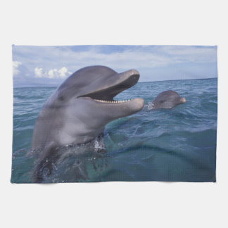 Caribbean, Bottlenose dolphins Tursiops 5 Kitchen Towel