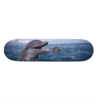 Caribbean, Bottlenose dolphins Tursiops 5 Skateboard Deck