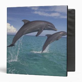 Caribbean, Bottlenose dolphins Tursiops 6 3 Ring Binder