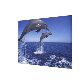 Caribbean, Bottlenose dolphins Tursiops 6 Canvas Prints