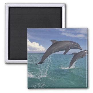 Caribbean Bottlenose dolphins Tursiops 6 Magnet