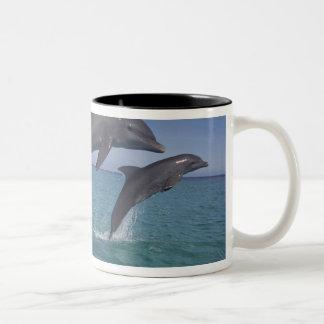 Caribbean, Bottlenose dolphins Tursiops 6 Two-Tone Coffee Mug