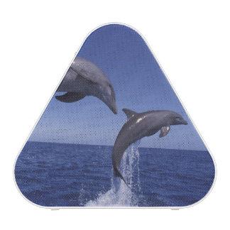 Caribbean, Bottlenose dolphins Tursiops 7 Bluetooth Speaker