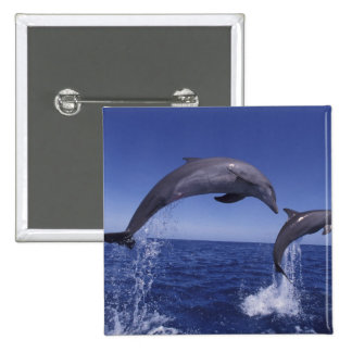 Caribbean, Bottlenose dolphins Tursiops 7 Button