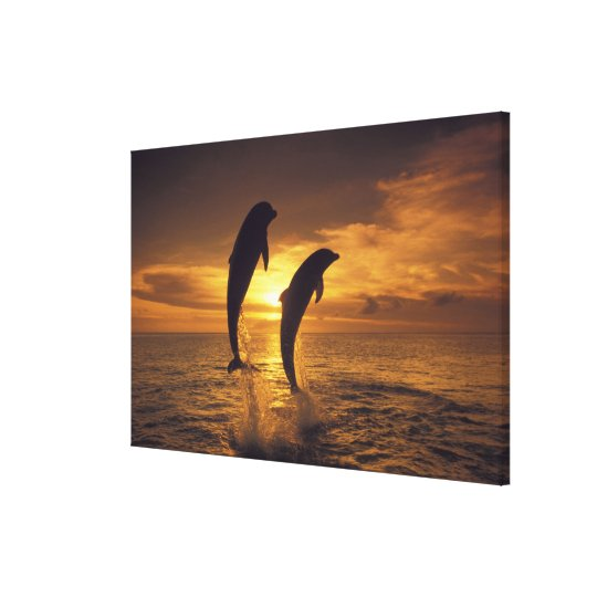 Caribbean, Bottlenose dolphins Tursiops 7 Canvas Print