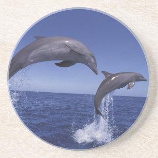 Caribbean, Bottlenose dolphins Tursiops 7 Coaster