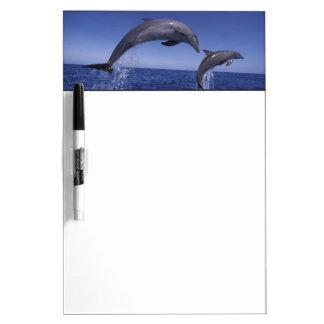 Caribbean, Bottlenose dolphins Tursiops 7 Dry Erase Board