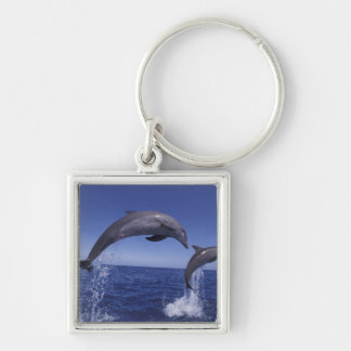Caribbean, Bottlenose dolphins Tursiops 7 Keychain
