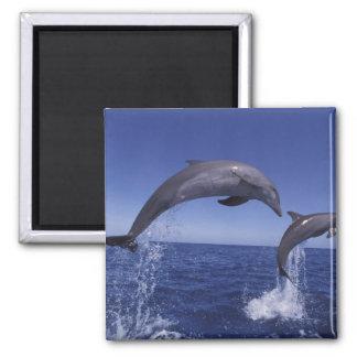 Caribbean Bottlenose dolphins Tursiops 7 Magnet