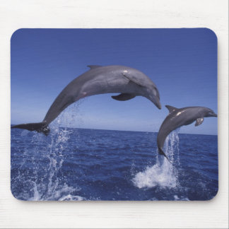Caribbean, Bottlenose dolphins Tursiops 7 Mouse Pad